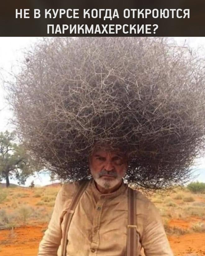 Когда откроются парикмахерские