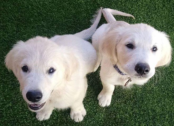 Колбі і Блю