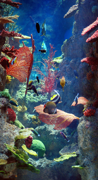 Шарджанський акваріум Sharjah Aquarium