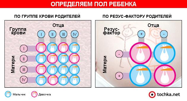 Инфографика: определяем пол ребенка