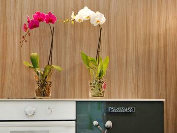 Як пересадити орхідеї в домашніх умовах