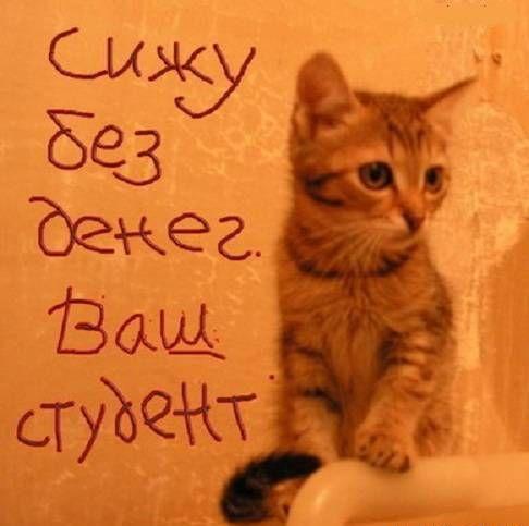 Котейная открытка с Днем студента