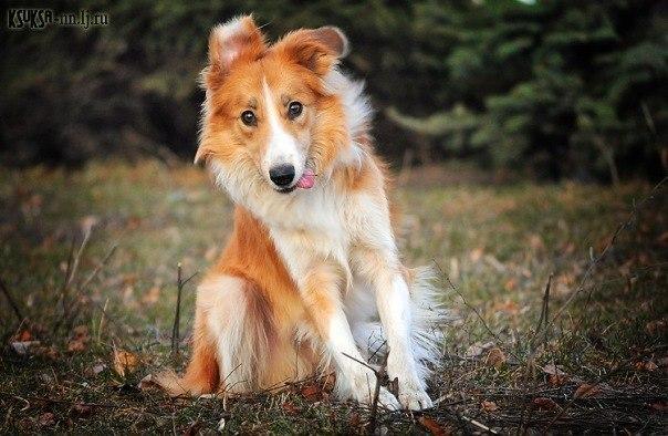 Няшная фотосессия собаки-стесняки
