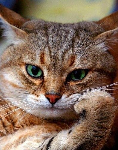 Супер приколы про котов