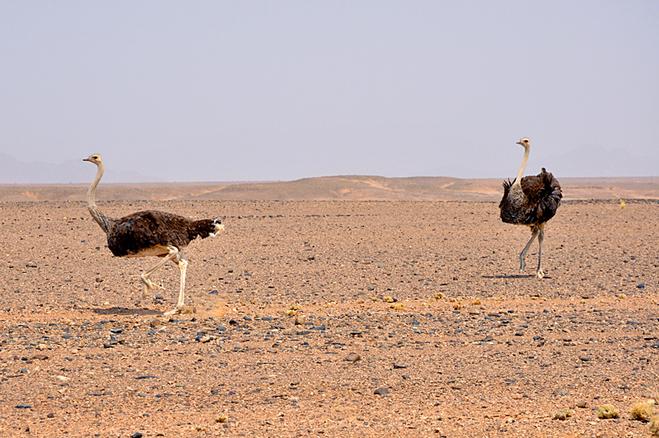 Национальные парки мира: Национальный парк Намиб-Науклуфт