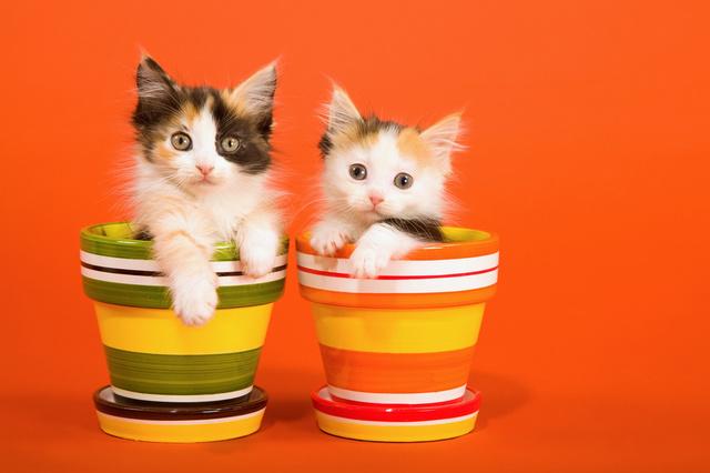 Няшная открытка с котиками