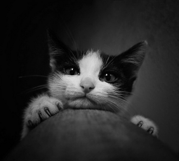 Черно-белые котейки