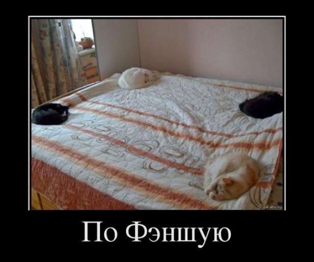 Демотиватор про правильных котэ