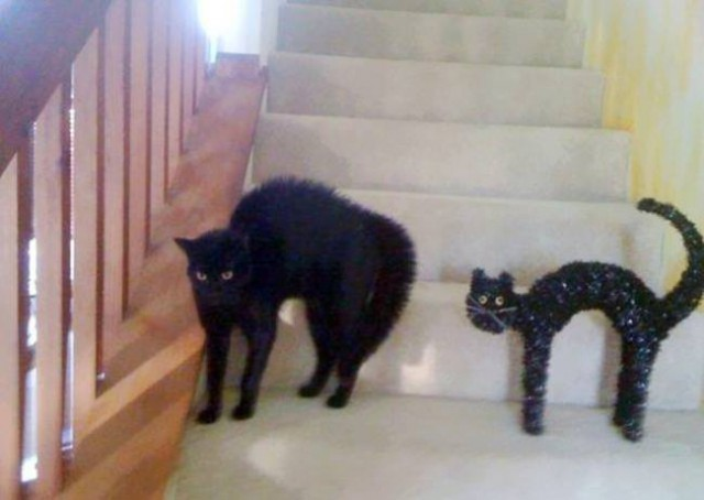 Коты, похожие на кого угодно