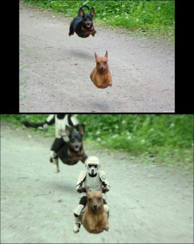 Звездные собаки