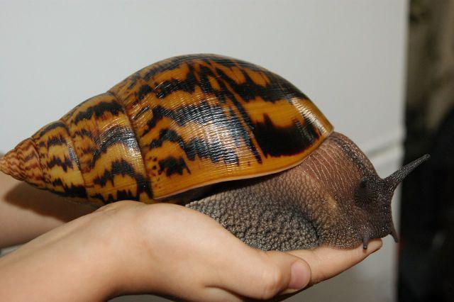 Минизоопарк дома: 5 животных, которые не займут много места