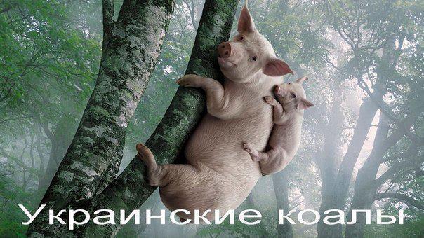 Прикольное фото свинтусов