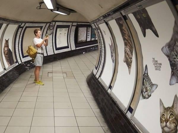 Котики в британском метро вместо реклами