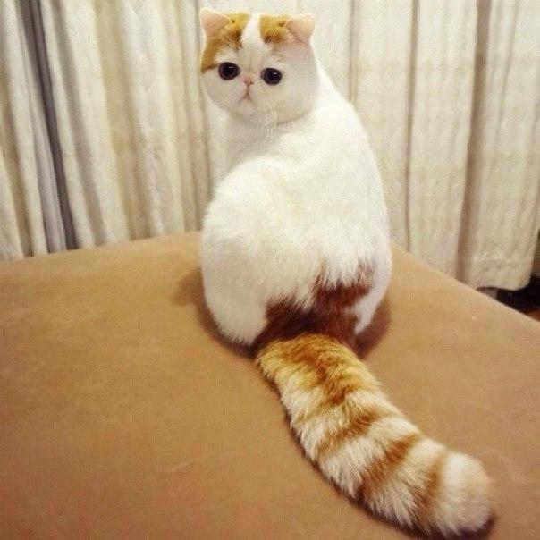 Самое милое котэ в мире