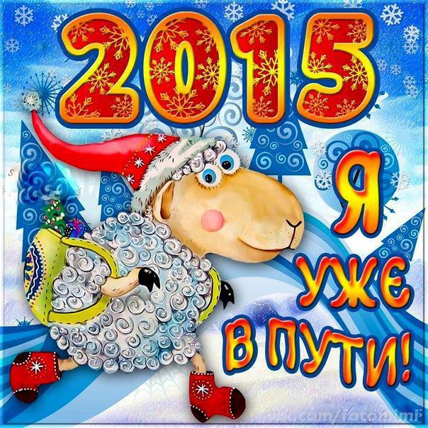 Год овцы уже в пути 2015