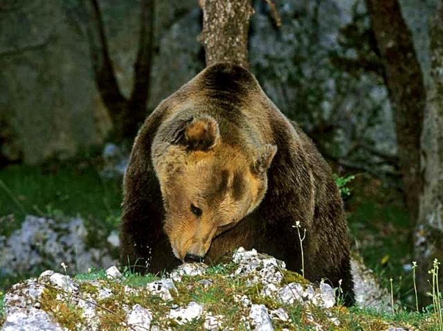 Экотуризм: куда поехать любителю природы - Национальный парк Италии Parco Nazionale d'Abruzzo