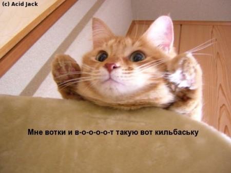 Подборка смешных котиков