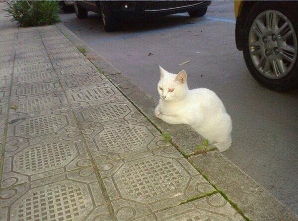 Белая котейка в ожидании