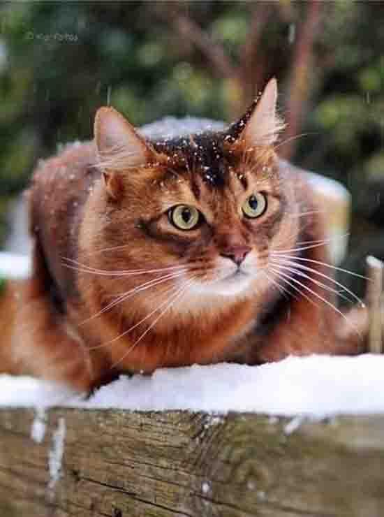 Рыжик в снегу