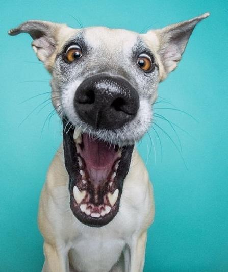 Неподдельные эмоции: самые экспрессивные собаки (фотопроект)