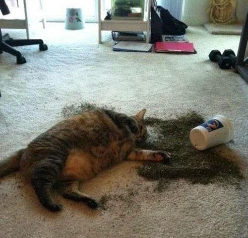Котики и валерьанка