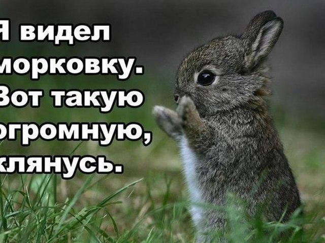 Прикольные картинки с надписями про зайчиков