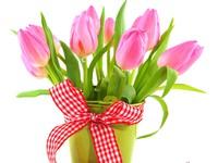 Нежные тюльпаны к празднику