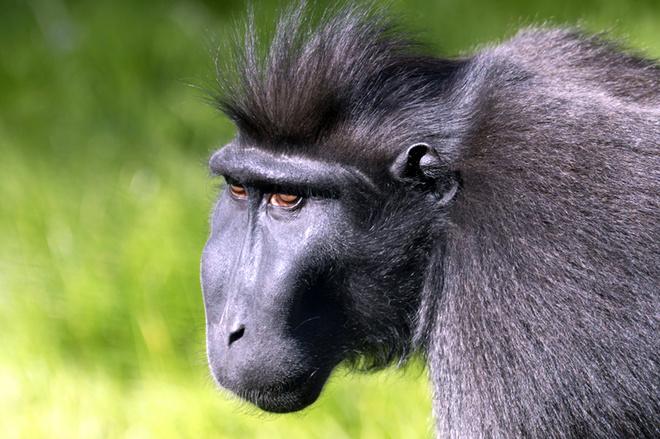 Гороскоп 2016: прикольні передбачення для всіх знаків зодіаку в рік Мавпи