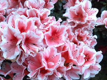 5 цветущих комнатных растений, которые любят прохладу