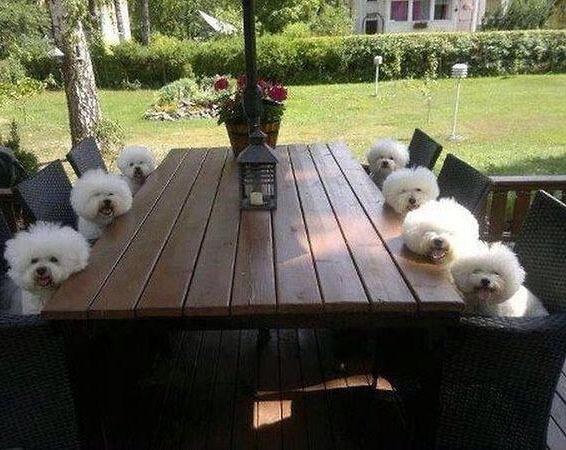 Собрание белых кучеряшек