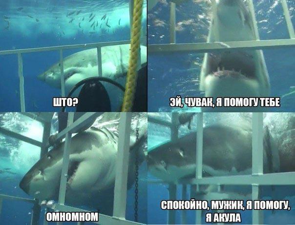 Прикольный комикс про спасающую акулу
