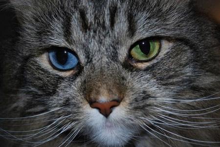 Подборка котэ с разным цветом глаз