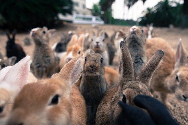 Окуносіма: острів кроликів у Японії