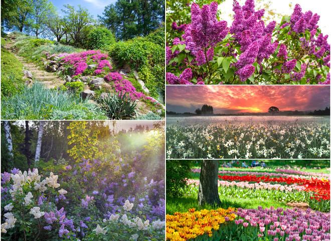 Куда поехать в апреле в Украине: найди свой цветочный рай
