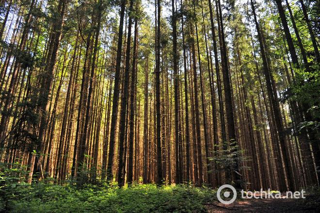 Яремче: смарагдовий колір літа на Прикарпатті