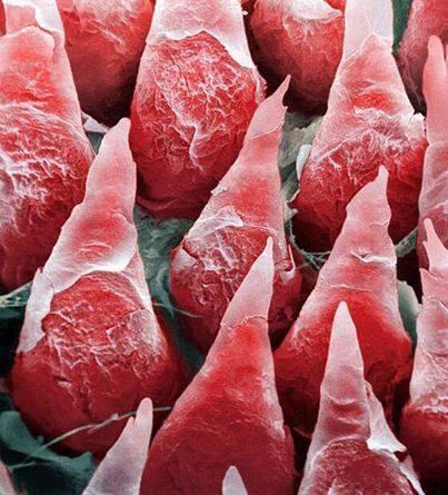 Клитор через микроскоп фото, минет в машине домашнее видео