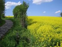 Цветущее поле
