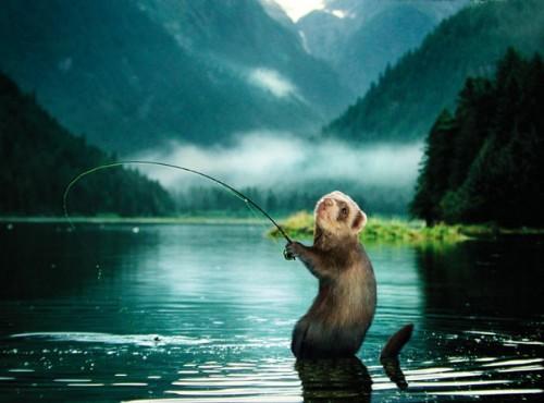 Купил мотыля и пошел на реку.. Я  люблю рыбалку =)