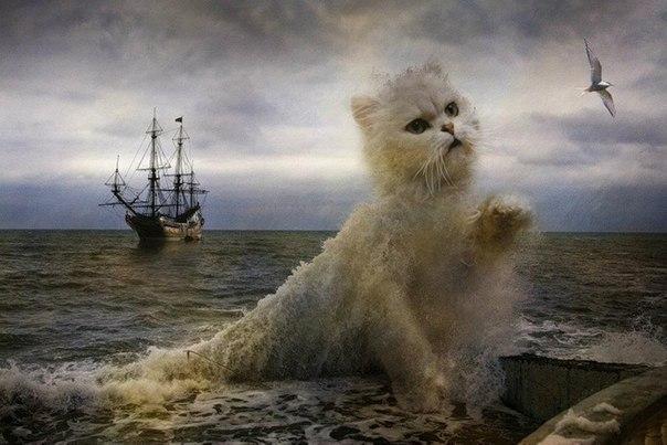 Коты из глубин морской пучины
