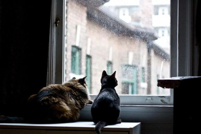 Коты в ожидании хозяев