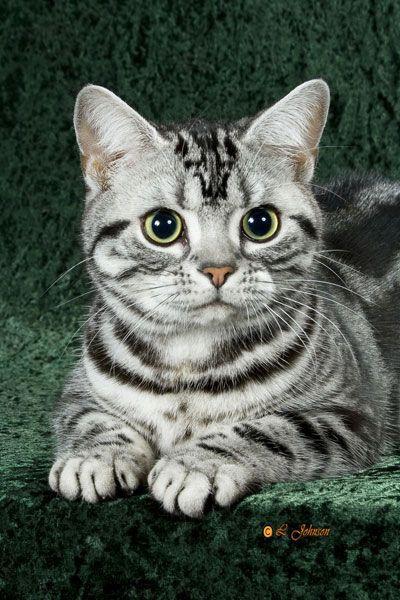 Усы, лапы и хвост: самые красивые коты в мире