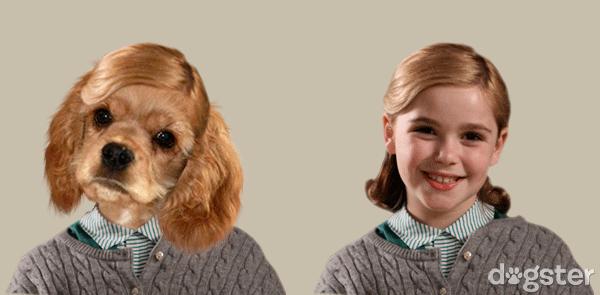 Супер прикольные собаки - человяки