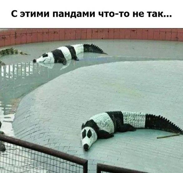 Крокопанды и пандадилы. Прикол