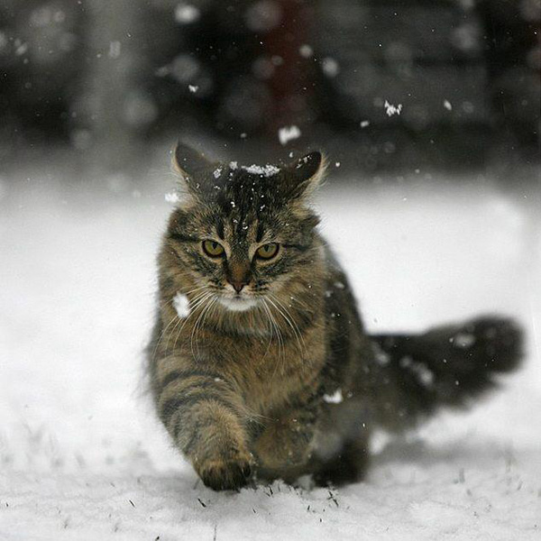 Пушистые и снежок