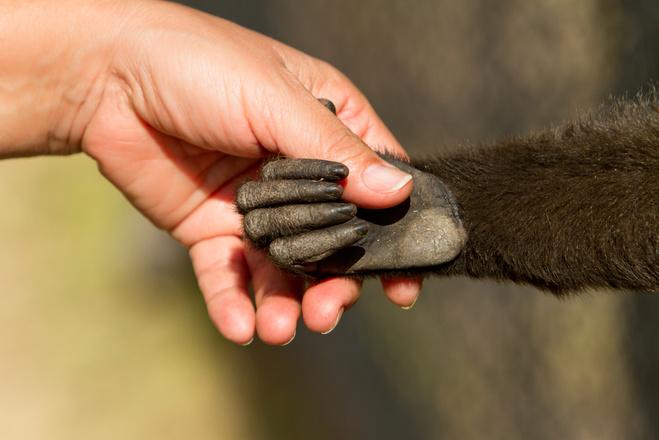 Привітання з роком Мавпи