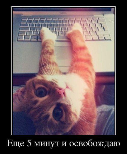 Прикольные демотиваторы про котов