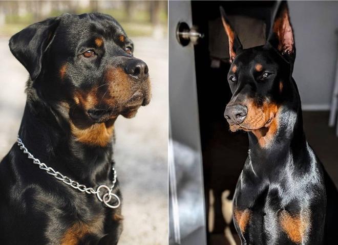 Cамые опасные собаки в мире: породы и фото