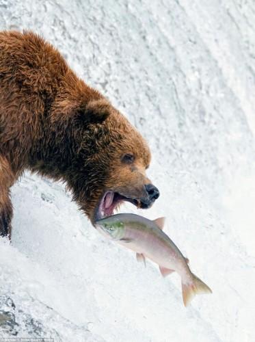 Пикник медведей
