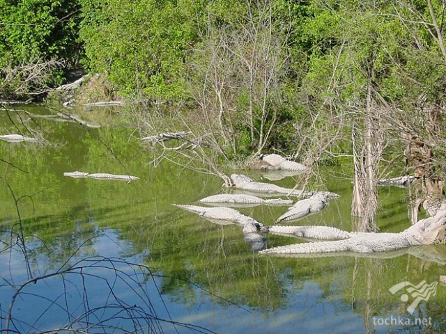 Національний парк Еверглейс (США, штат Флорида)