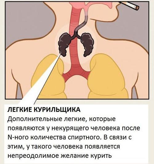 Скрытые факты человеческого тела